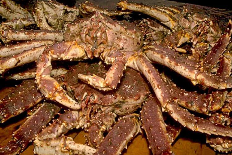 BSAI Crab.jpg