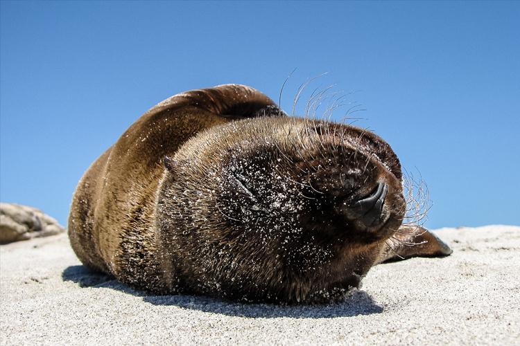 California_Sea_Lion-thumb.jpg