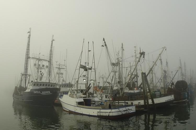 Commercial fishing boats at a harbor at Westport, Washington.jpg