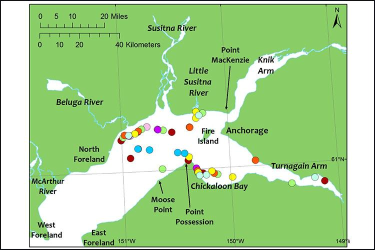 Cook_Inlet_Beluga_Whale_Survey11.jpg