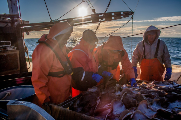 Four crew members examining catch on board fishing vessel, sun in the background.