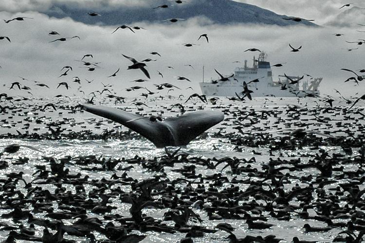 Ecosystem-whale-thumb.jpg