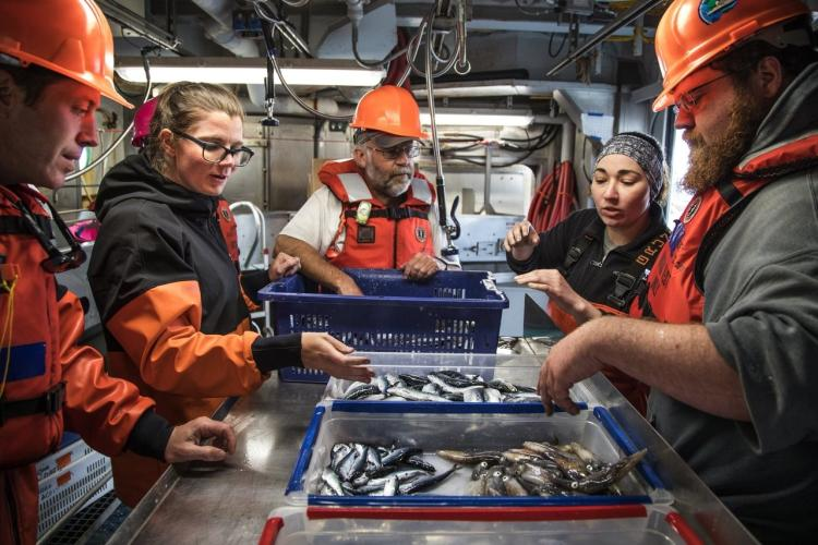 fish-growth-and-ocean-ecology-sorting-at-Seattle-Times.jpg