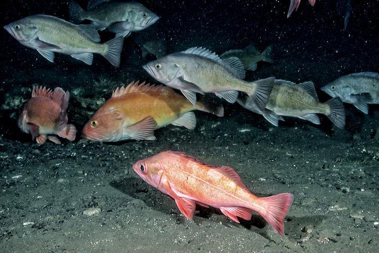 Fish_Habitat2-thumb.jpg