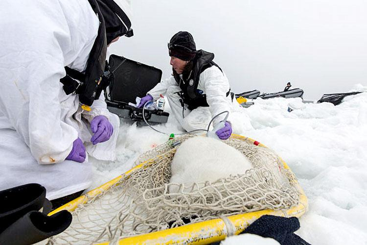 icesealecology_ziel-1-retouched.jpg