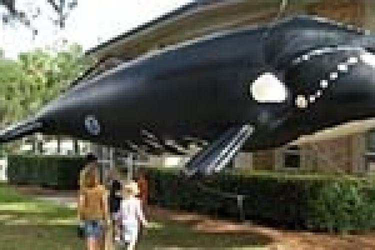 inflatablewhale.jpg