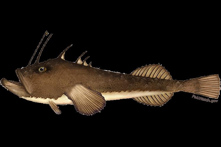 monkfish.png