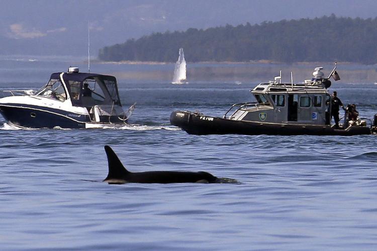 patrol-boat-around-whale-OLE.jpg