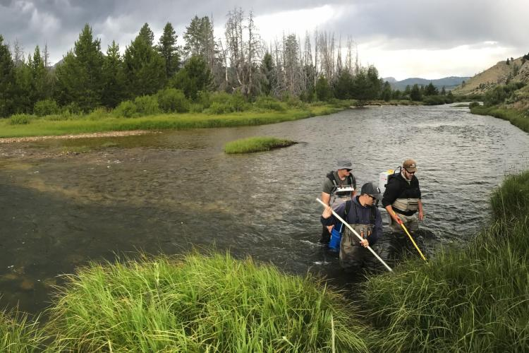 pit-tagging-in-river-NOAA-NWFSC.jpg