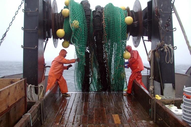 pulling up a net on a vessel nwfsc.jpg