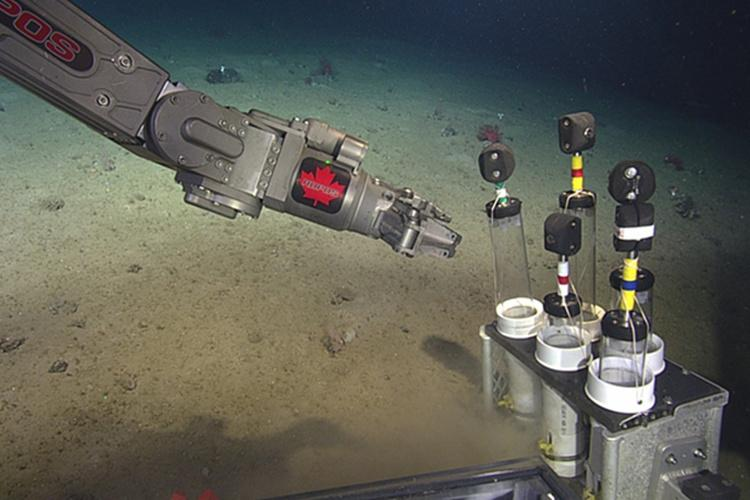 Robotic arm placing samples into tray near the bottom of ocean.