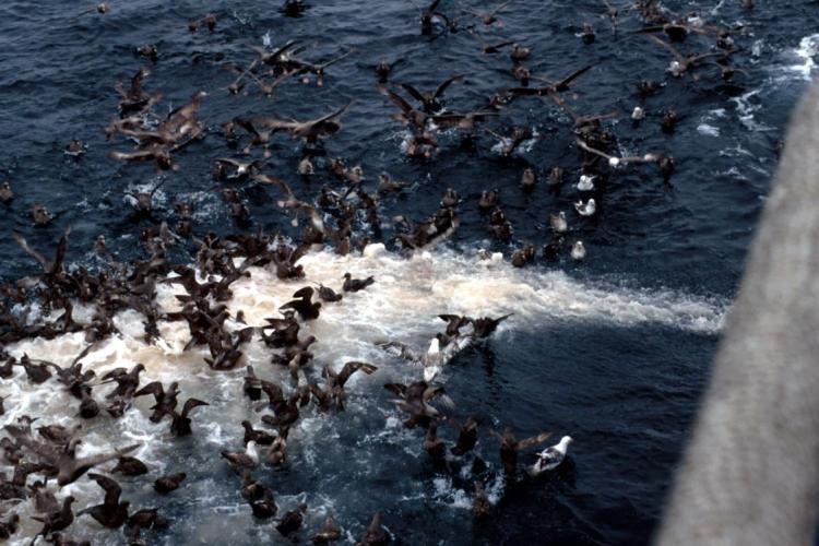 seabirds-offal-dis.jpg