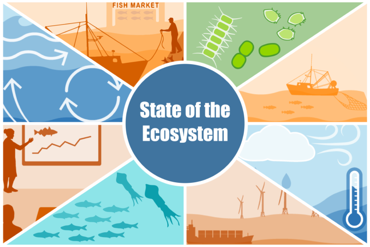 A state of the ecosystem infographic of images representing the fishing industry, primary production, fishing, climate change, other human uses of the ocean, forage fish, synthesis presentations, and currents.