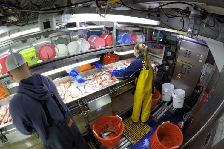 Lab room on the Bigelow, two scientist are sorting fish.