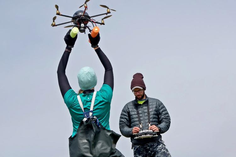 Steller Sea Lion Aerial-based Studies.jpg