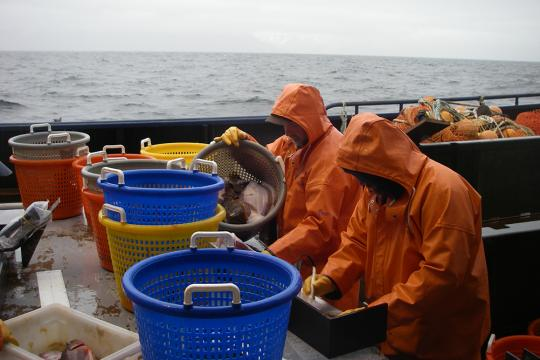 Photo of scientists sorting and measuring fish from baskets on a boat deck.