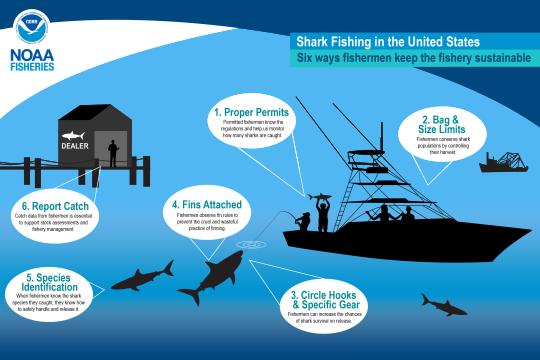 The six ways fishermen help keep the U.S. shark fishery sustainable.