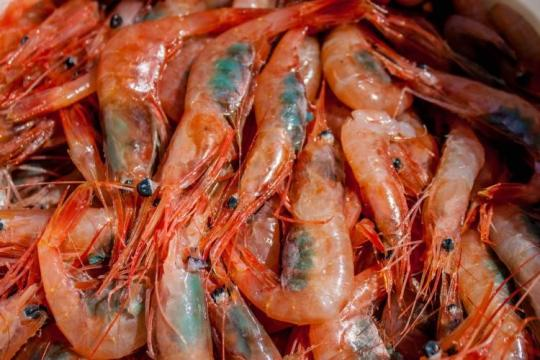 A pile of brightly colored live shrimp with dark areas on the abdomen. Eyes, tentacles on the head, and segmented hard shells are clearly visible.
