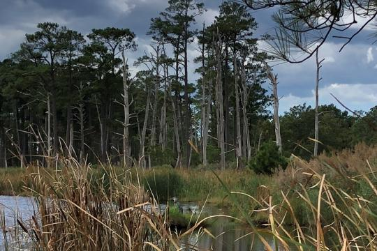 Dead trees are visible in a marshy area.