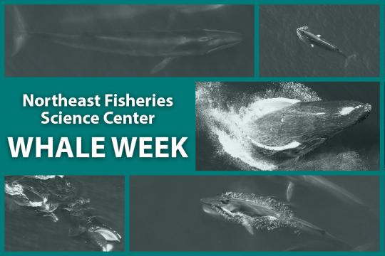 2020 Whale Week Feature Image 5.jpg
