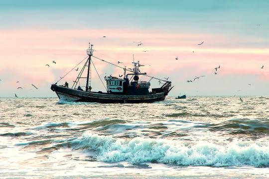 Fshing ship surrounded  of seagulls in Atlantic ocean at sunset