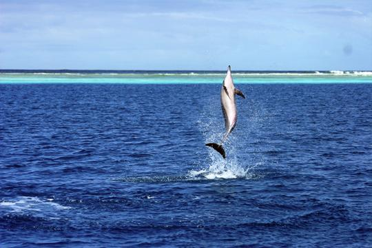 750x500-spinner-dolphin-out-of-water-spinning-NOAA-PIFSCjpg.jpg