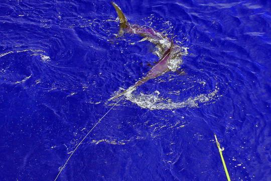 750x500-swordfish-fishing.jpg