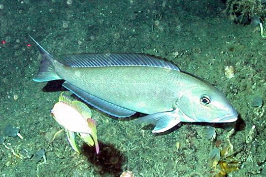end_to_overfishing01.jpg