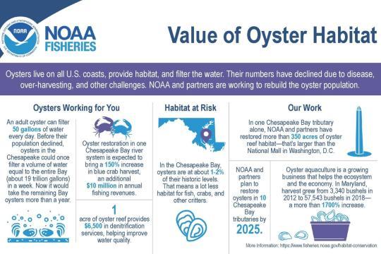 Infographic Value of Oyster Habitat.jpg