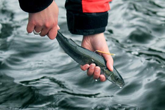 Sablefish2-thumb.jpg