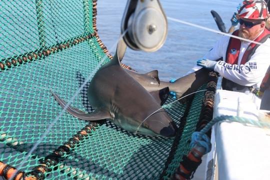shark_cruise_26.jpg