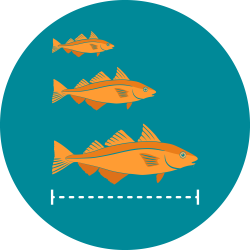 The icon for whole fish shows three orange haddock illustrations from smallest at the top to the largest at the bottom to represent fish growth rates with a white dotted line under the largest fish to indicate collection of the entire fish.