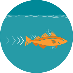 The icon for fish muscles shows the orange haddock illustration underwater with small lines coming from its fins to indicate energy and movement.