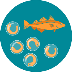 The icon for fish gonads shows the orange haddock illustration above five fish eggs to represent fish maturity and spawning.