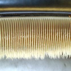 Close up image of baleen sheets from a whale's mouth