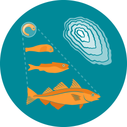 The icon for fish otoliths shows illustrations of a small fish egg, larval fish, and juvenile fish, leading from the top left down to the adult orange haddock at the center, connected by dotted lines to indicate fish age, next to an illustration of an otolith showing the growth rings in the bones.