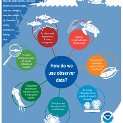 Infographic explaining fishery observer data use.