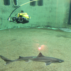 Remotely operated vehicle with camera viewing spiney dogfish in tank.