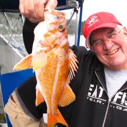 Image of captain with a Canary rockfish collected in Puget Sound, WA.