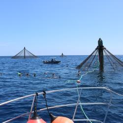 Open ocean net pen.
