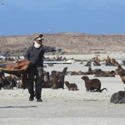 Tony Orr studying fur seals