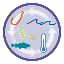 Multiple system drivers: Decorative image illustrating the physical, chemical, biological and human factors affecting the ecosystem.