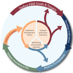 Define Goals and Targets, Develop Indications, Assess Ecosystem, Analyze Uncertainty and Risk, Formulate strategies.