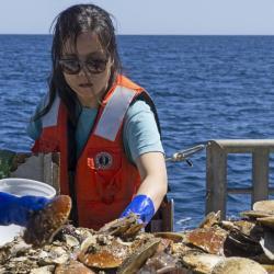 Jui Han sorts scallop during survey