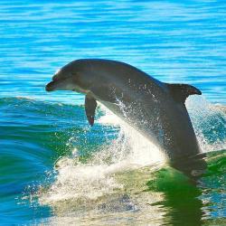 1280x800-dolphin-pixabay-CC0.jpg