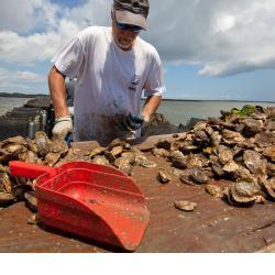 1280x800-oyster-aquaculture-AQ.jpg
