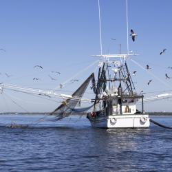 Gulf Coast Shrimping Boat in Biloxi