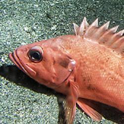 Marine Ecology and Stock Assessment Program-bio image.jpg