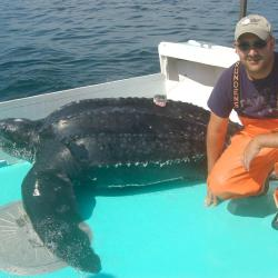 Researcher on deck of ship with leatherback sea turtle.