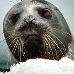 The Polar Ecosystems Program-bio.jpg